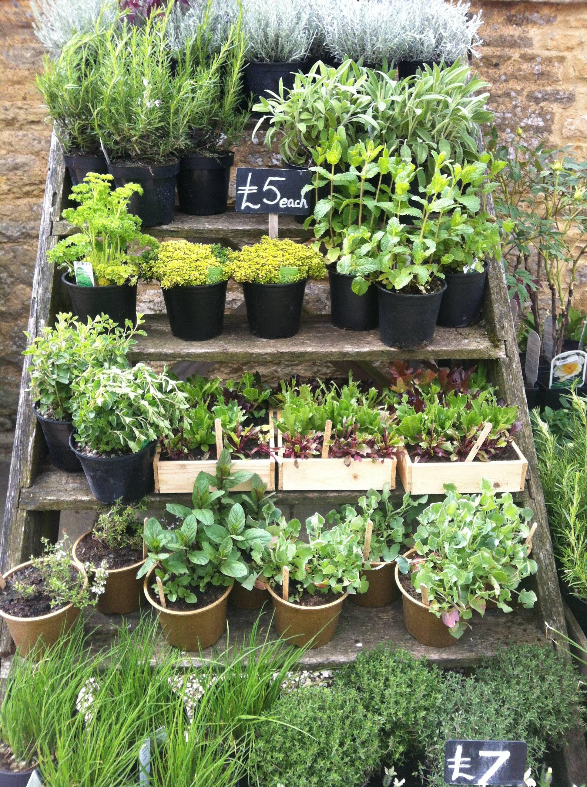 daylesford herbs, cotswolds | Herb garden pallet ...