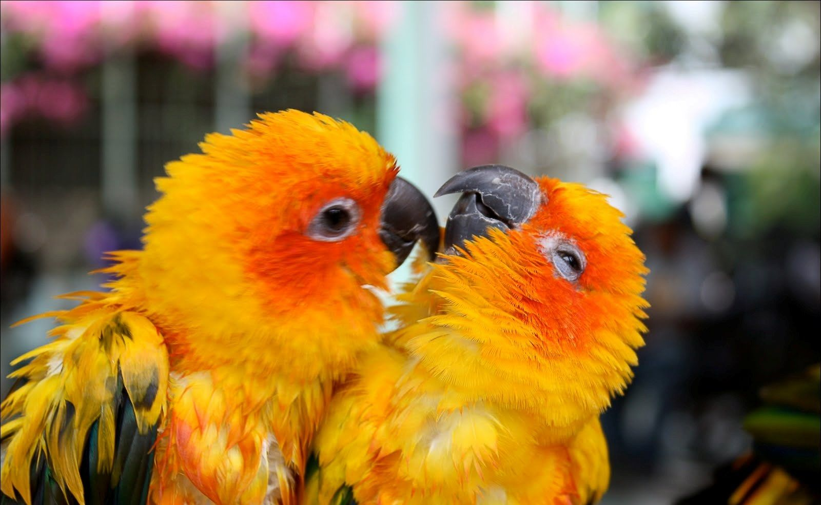 Cute Love Wallpapers Cute Love Birds Wallpapers Good Morning