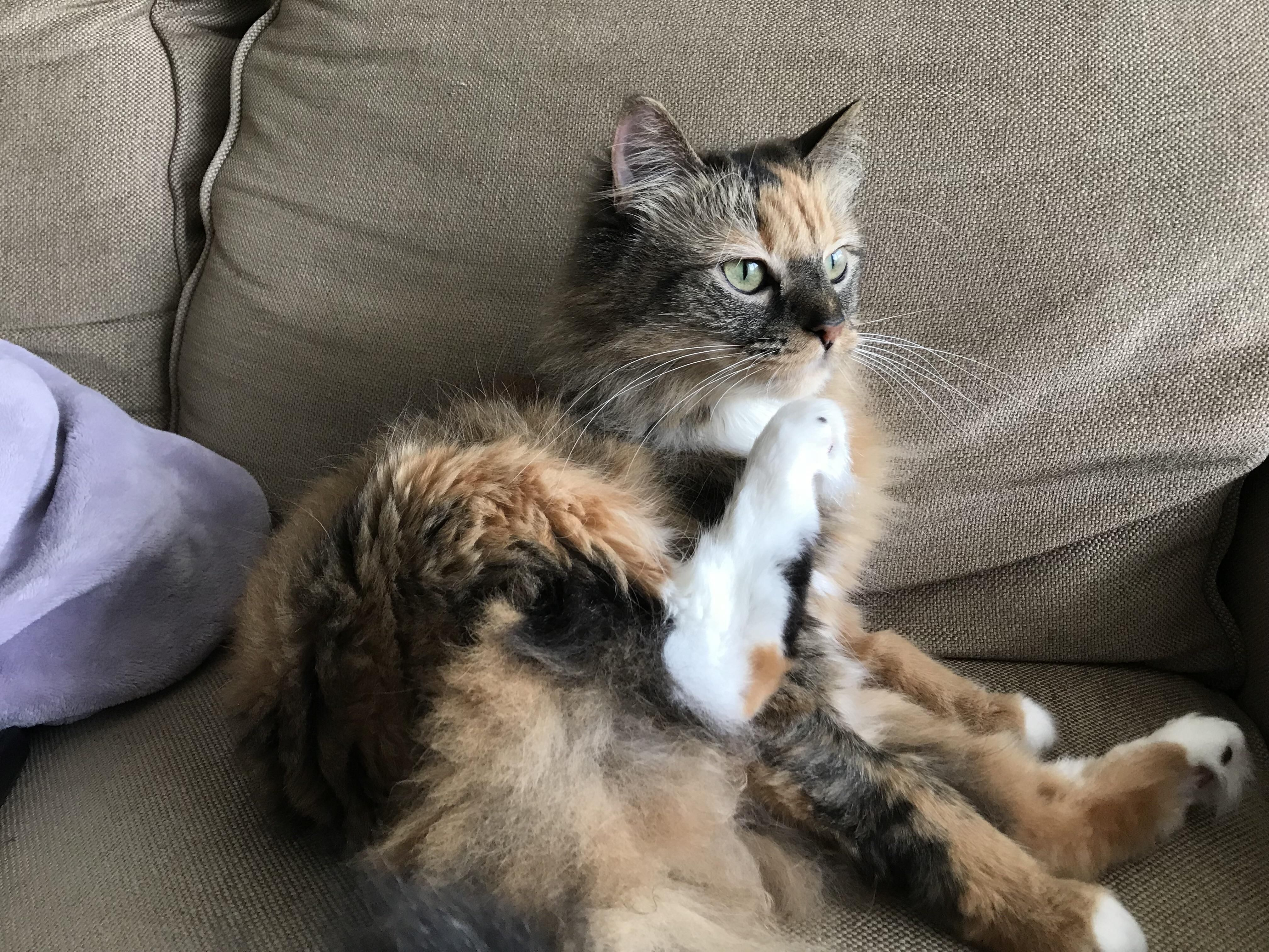 Settle A Debate Is Lily A Calico Or Tortoiseshell More Pics In Comments Kittens Cutest Pretty Cats Baby Cats