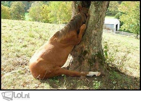 http://www.lol.nl/uploads/494/ikea-heeft-zelf-paardevlees-in-het-hout-zitten-2521.jpg