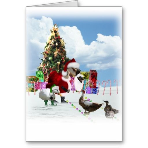 A Web Footed Christmas Card Christmas greeting cards and Bedford