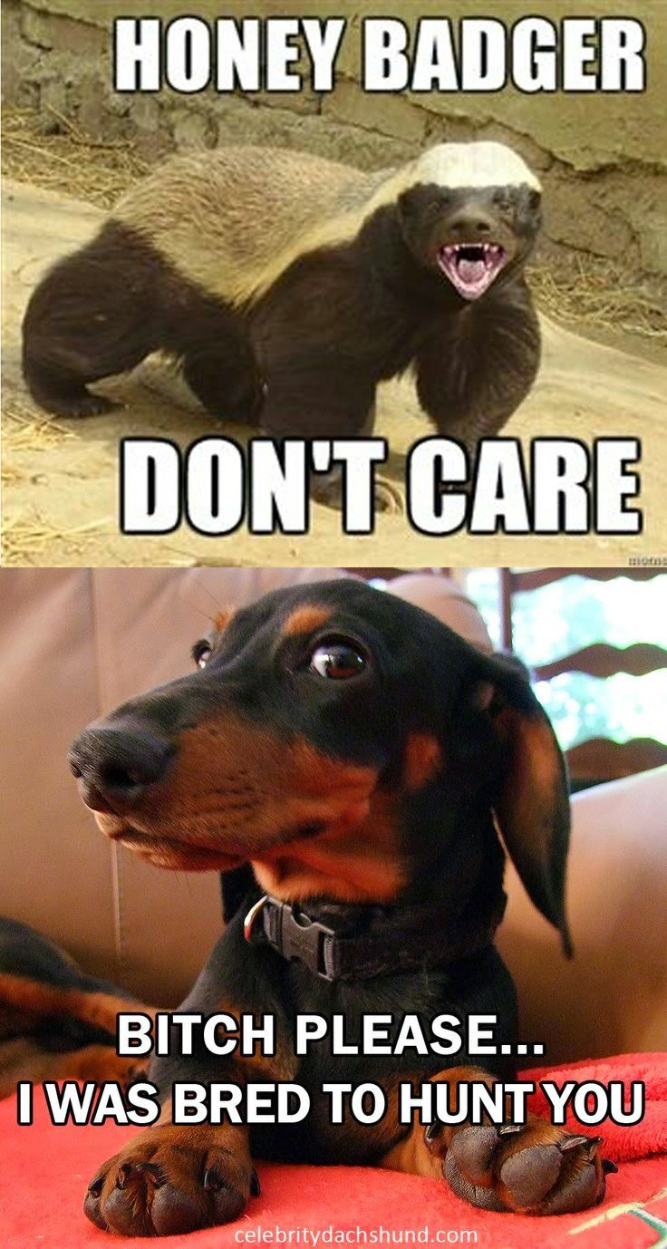 Wiener Dog Blog August 2014 Funny Dachshund Dachshund Love
