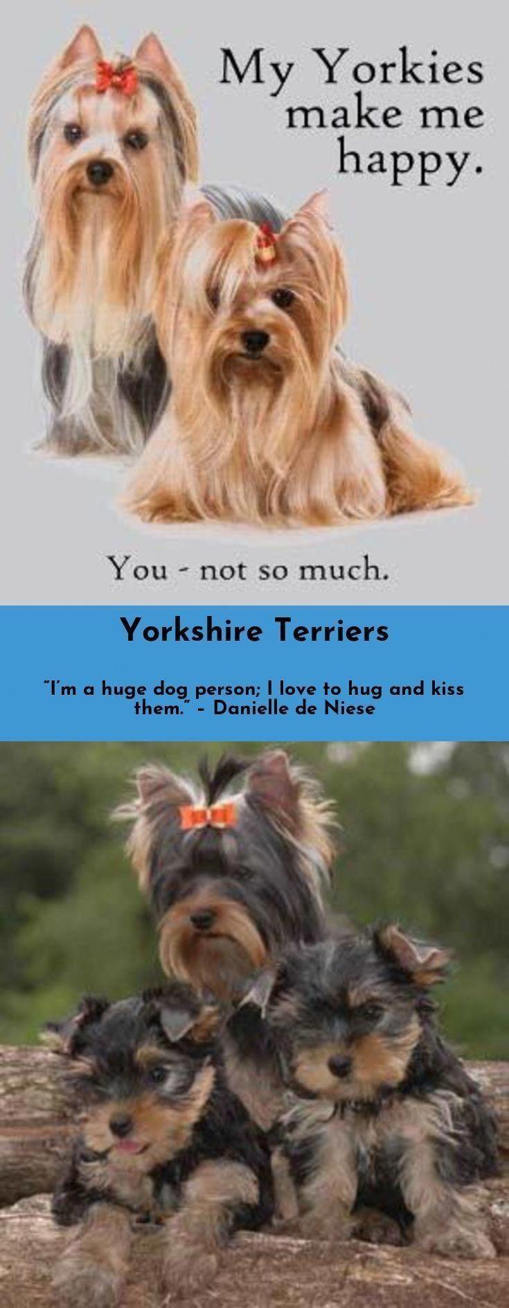 Tumblr In 2020 Dog Training Yorkshire Terrier Positive Dog Training