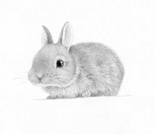 baby bunny study by