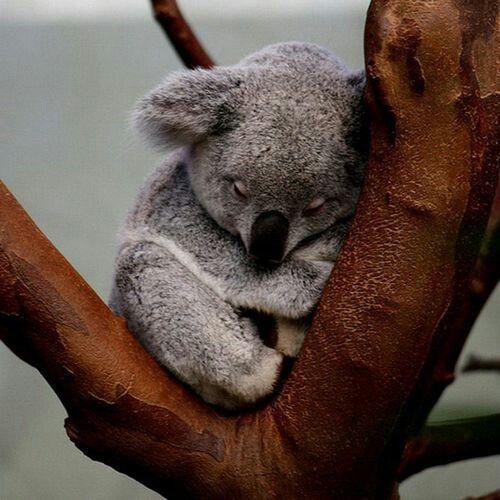 Still sleeping!!