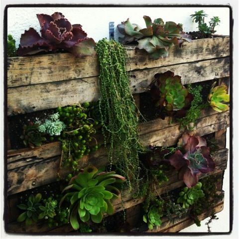 20120113-002103.jpg use of succulents - great textures and colours - need little water... great drawing subjects!