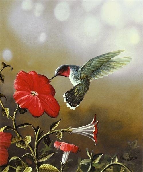 Ruby Throated Hummingbird - Jim Hansel
