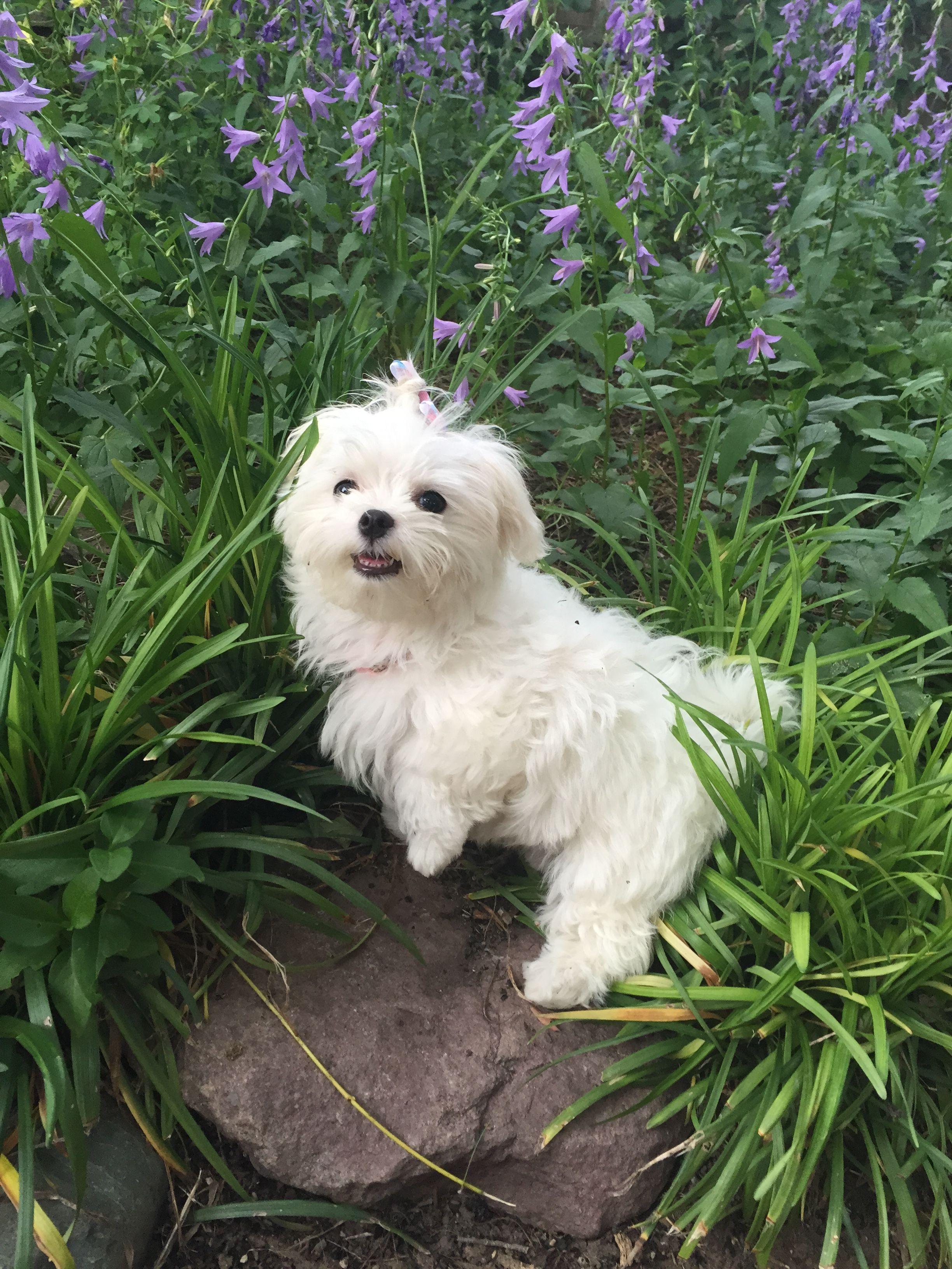 Lucy Enjoying Some Non Rainy Weather In Amarillo Texas