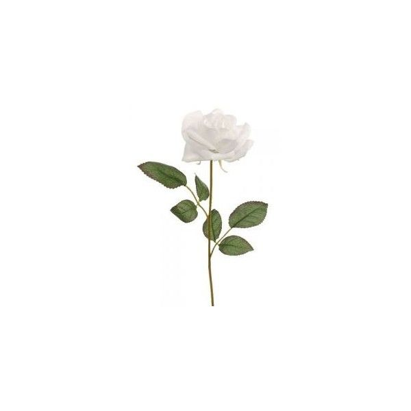 Pix For Single White Rose Stem White Roses Flower Wallpaper Flowers