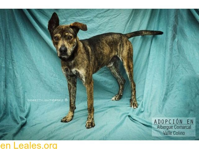 Perros En Adopción España Santa Cruz De Tenerife Tenerife Perros En Adopcion Perros Adoptar Un Perro