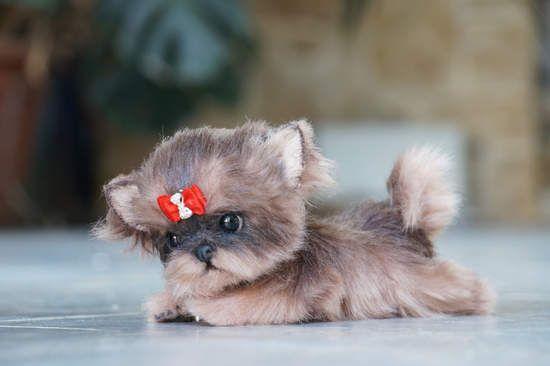 Puppy York By Tsybina Natali - Bear Pile