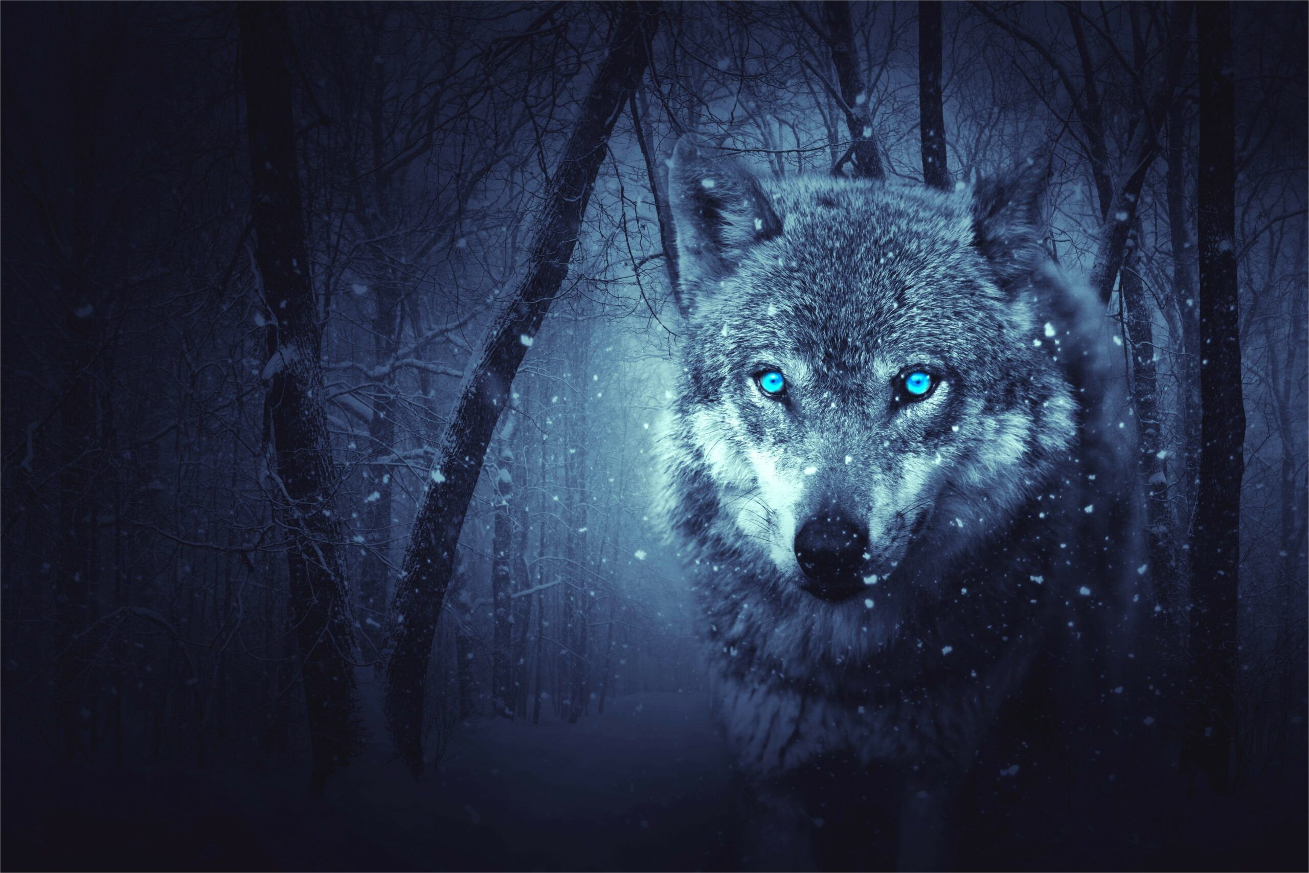 4k Resolution Wallpaper Wolf With Girl In 2020 Wolf Wallpaper Fantasy Wolf Animal Categories