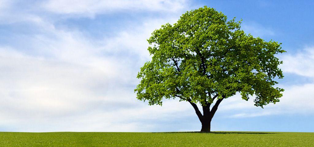 Bigtree Family Tree Maker Tree Family Tree