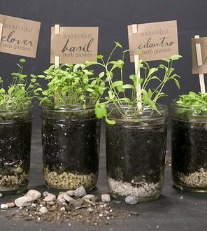 Kitchen Herb Kit Retro Cabinets Diy Mason Jar Garden Pinterest