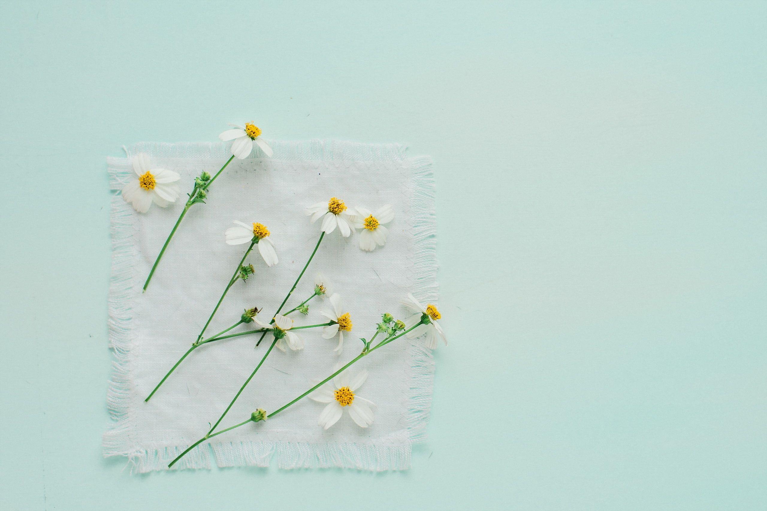 flowers white flowers minimalism 2K wallpaper