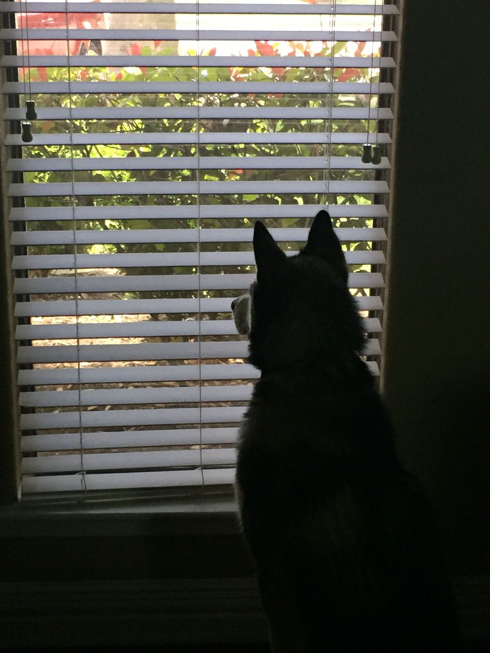 Window watching is his favorite thing to do to pass time