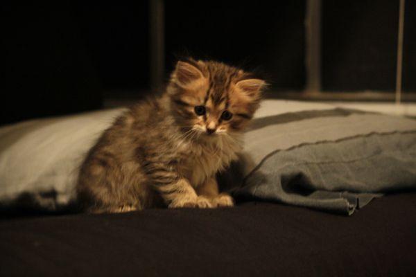 Cute Pets Animals Creatures