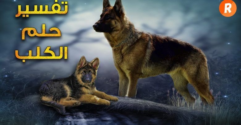 رؤية الكلاب في المنام كما ورد عن ابن سيرين Lockscreen Screenshot Lockscreen