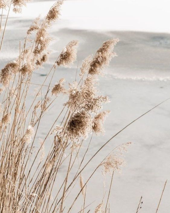 Hd wallpapers and background images Pin by 文静 on CABANE DE PLAGE - A SIGNATURE | Aesthetic ...