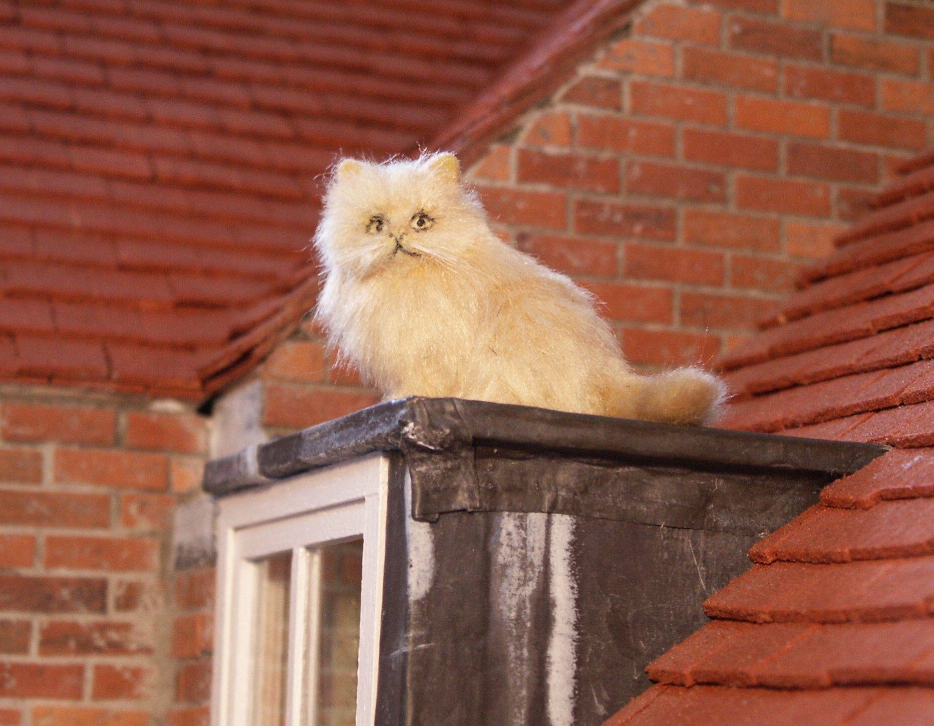 SITTING PERSIAN CAT Persian cat, Animals, Cats