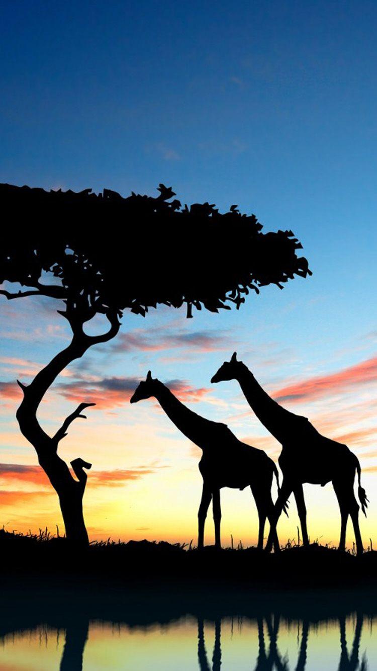 Giraffe Safari Africa Nature HD POSTER