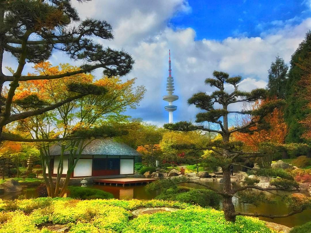 Pin On Japanese Niwaki Bonsai Trees