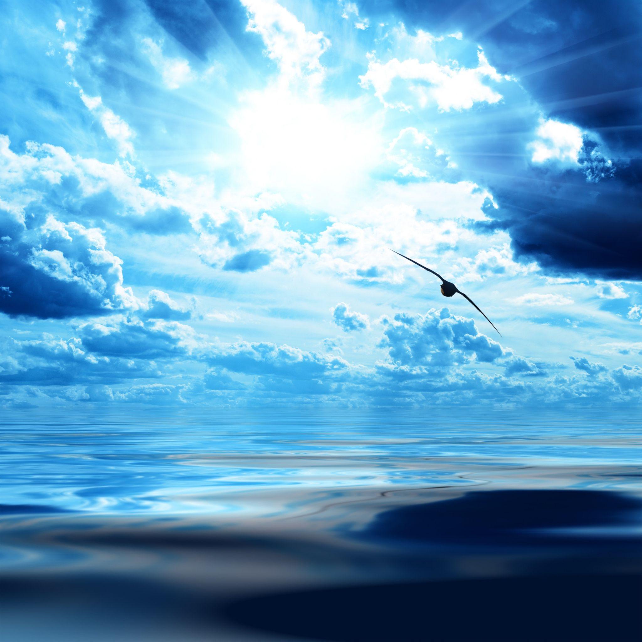 2048x2048 Wallpaper Passaro Voo Asas Altura Nuvens Ceu Azul