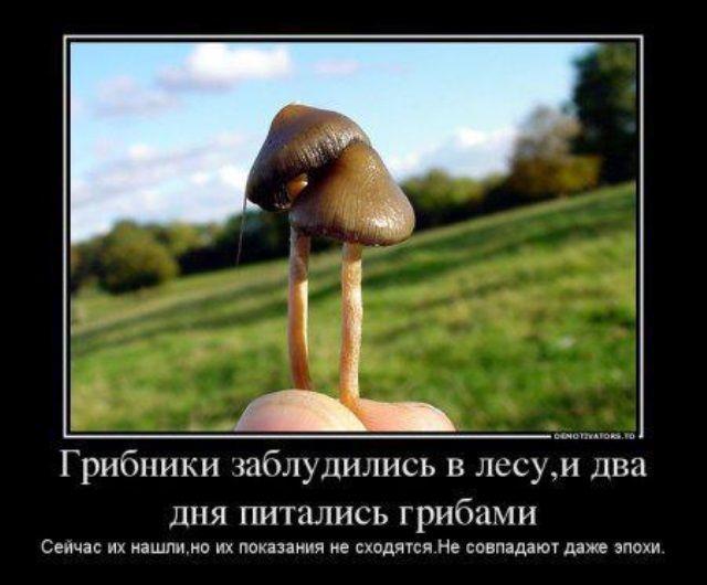 Прикольная картинка про грибников