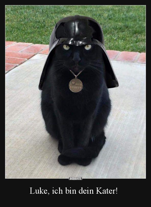 Luke Ich Bin Dein Kater Katzen Lustige Spruche Katze Lustig Lustige Tierbilder