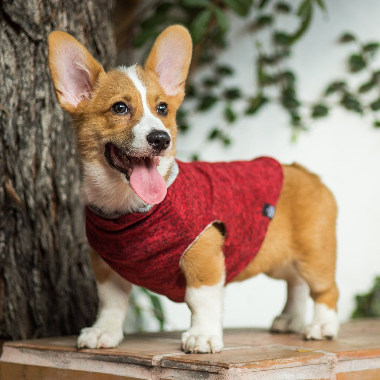847225a6 Dog Clothes That Give Back to Rescue Dogs: Reversible Dog Sweater Ethical Dog  Clothing #corgi #corgidog #dogclothes #dogsweater #petclothes  #petaccessories ...