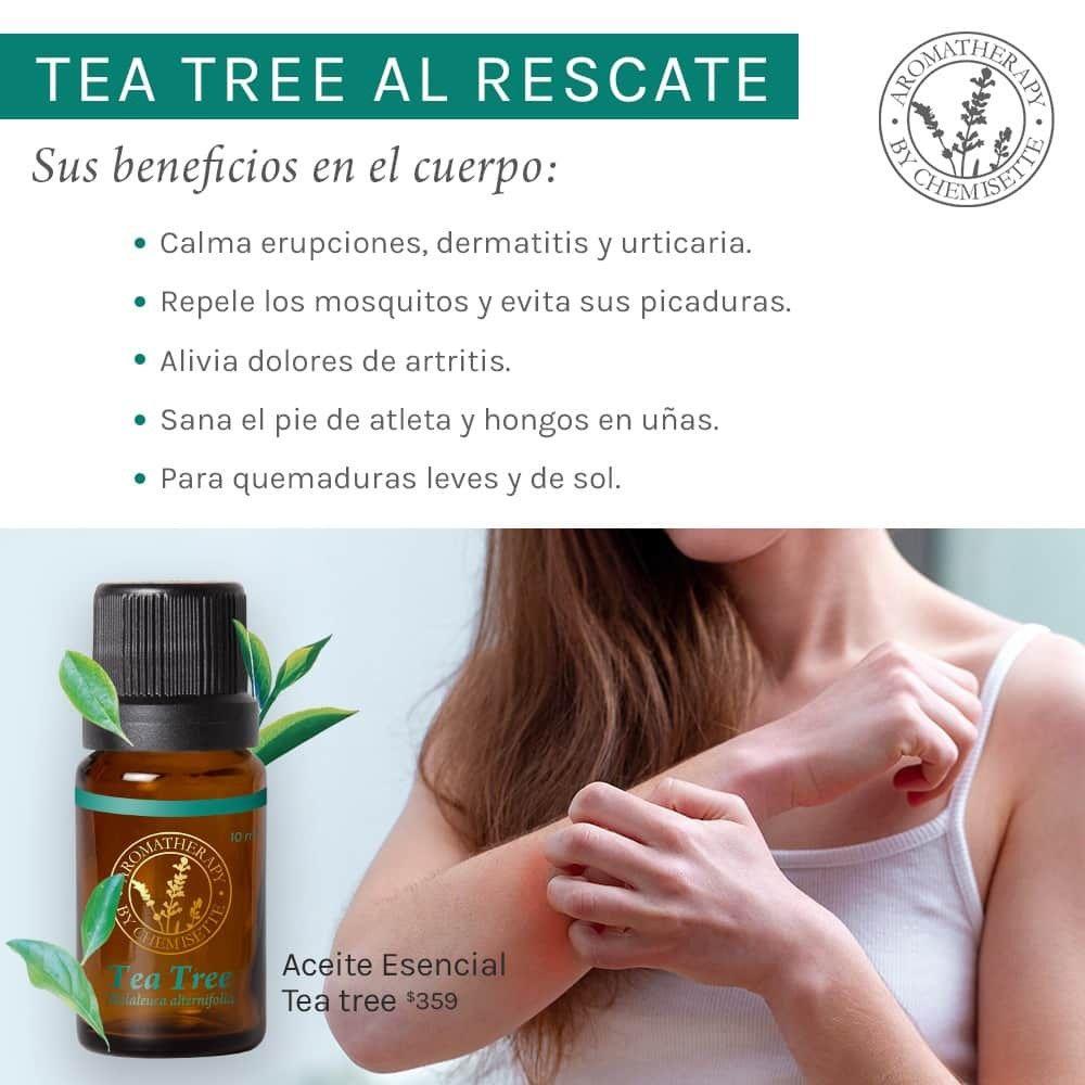 Aceite Esencial De Tea Tree árbol De Té 422 50 Aceite Aceite De árbol De Té Melaleuca