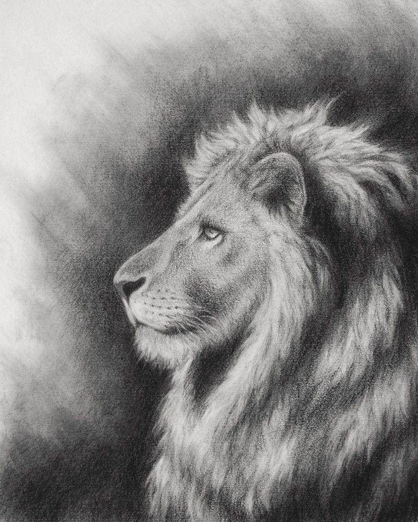 The Lion Of Judah Reigns John The Baptist Artworks Lion Drawing Lion Of Judah Jesus Lion Of Judah