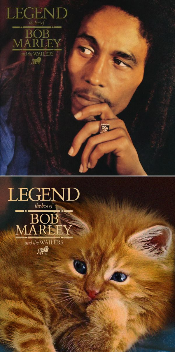 Classic Album Covers Recreated With Kittens Meow Meow Crazy Cat Lady Board Classic Album Covers Album Covers Kittens