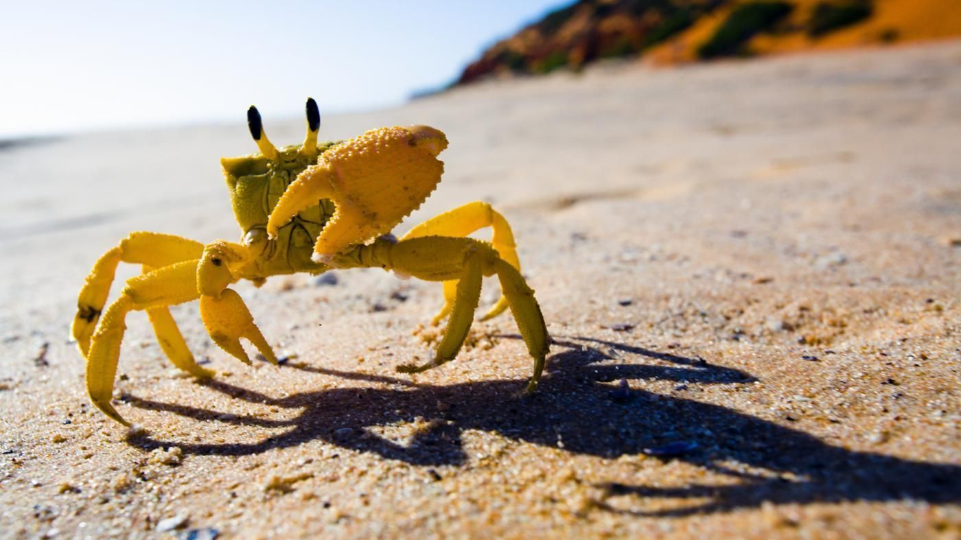 How Is a Crab Adapted to Life on the Seashore? Animals