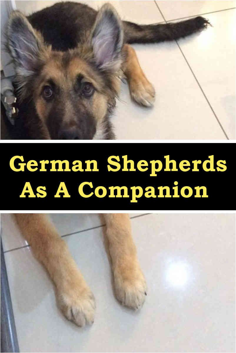 Are german shepherds good family pets german shepherd