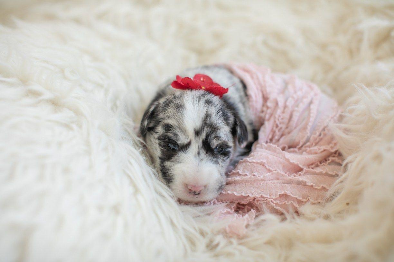 Newborn Puppy Photos Warrior Dog Rescue K Schulz Photography Newborn Puppies Puppy Photos Newborn And Dog