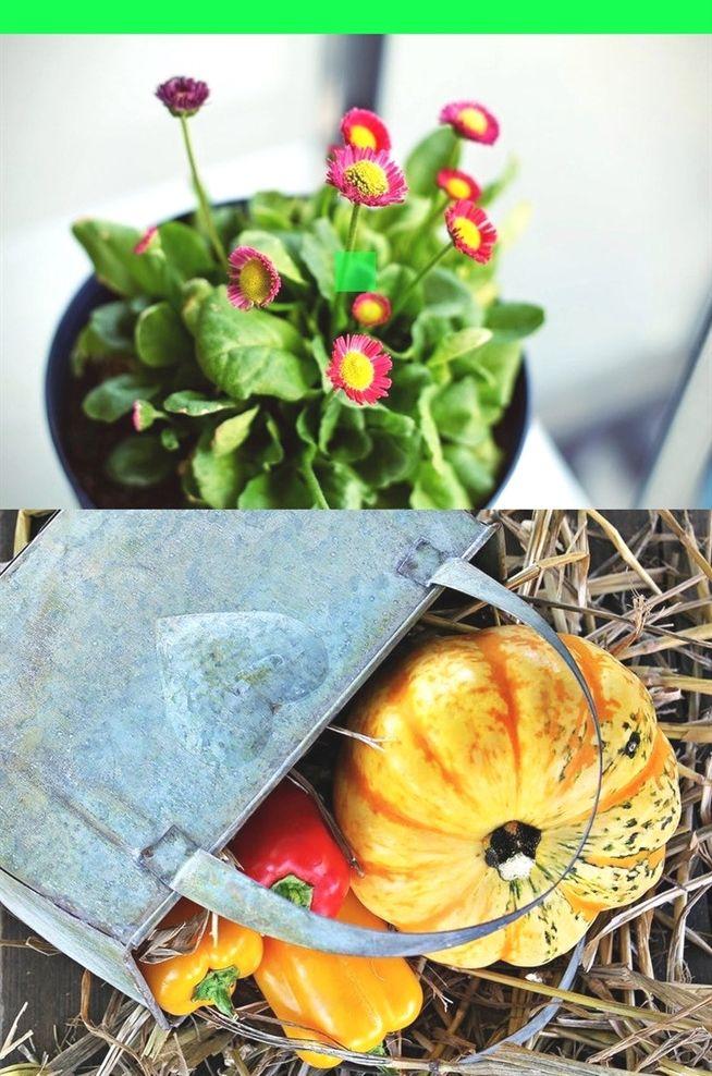 gardening elsa and anna fine #gardening magazine subscription ...