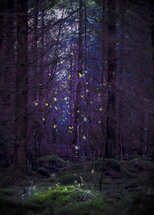 Haunted Forest Quot I Ve Just Joined This Board Made By V