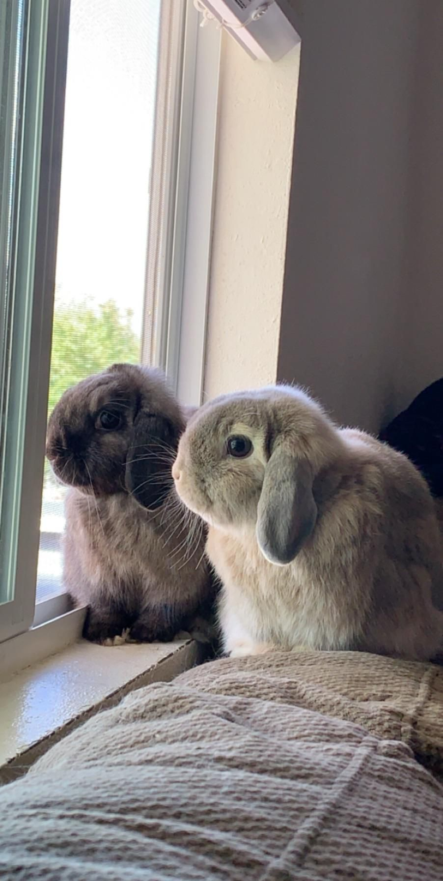 Best Rabbit Treats and Toys! #bunnylovers #rabbithouses #rabbitlove