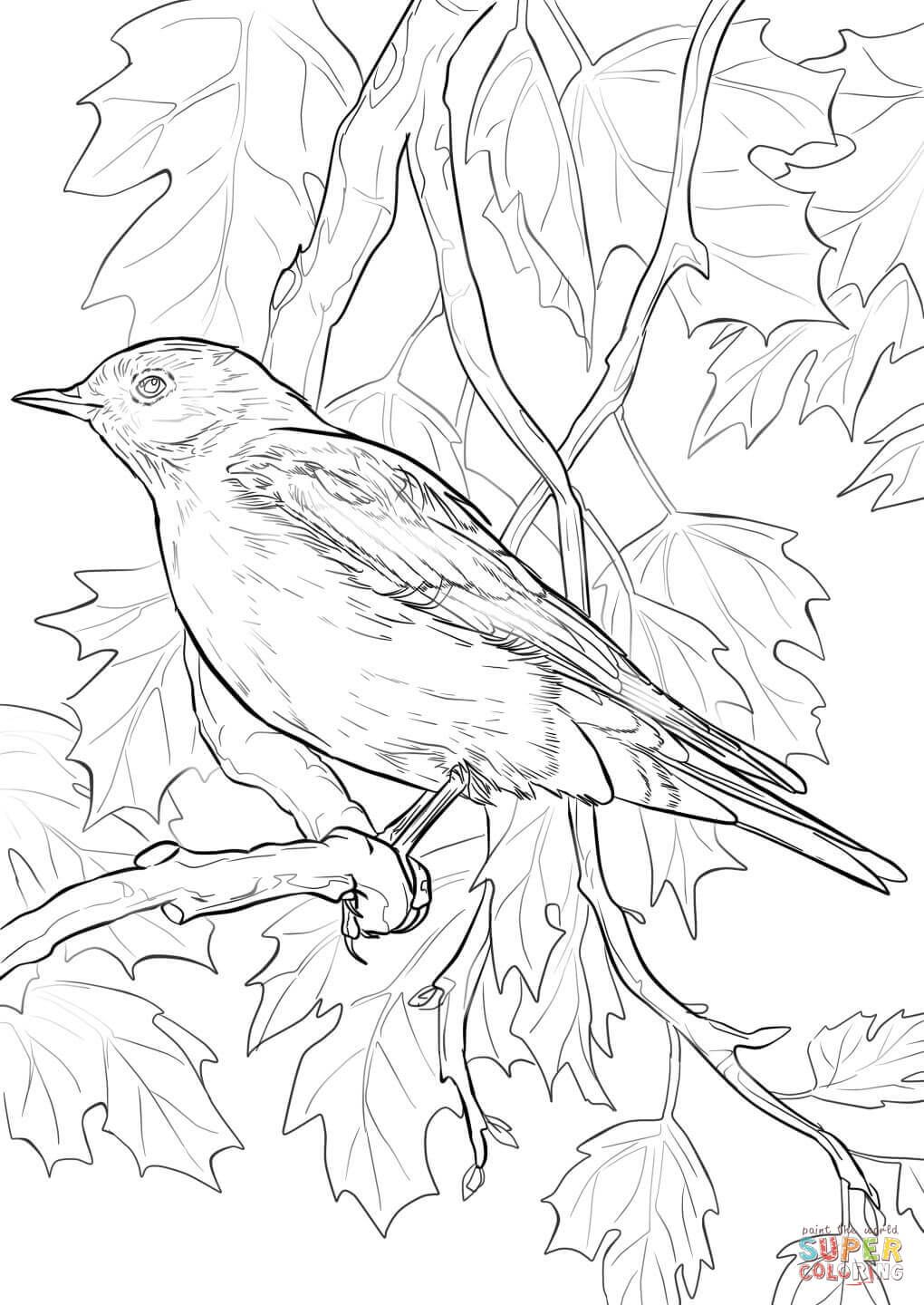Mountain Bluebird National Bird Of Italy Bird Coloring Pages