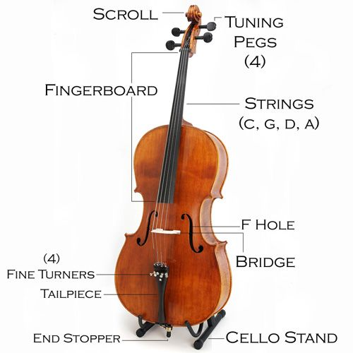 1000 images about cello on pinterest cello music violin and  : cello diagram - findchart.co