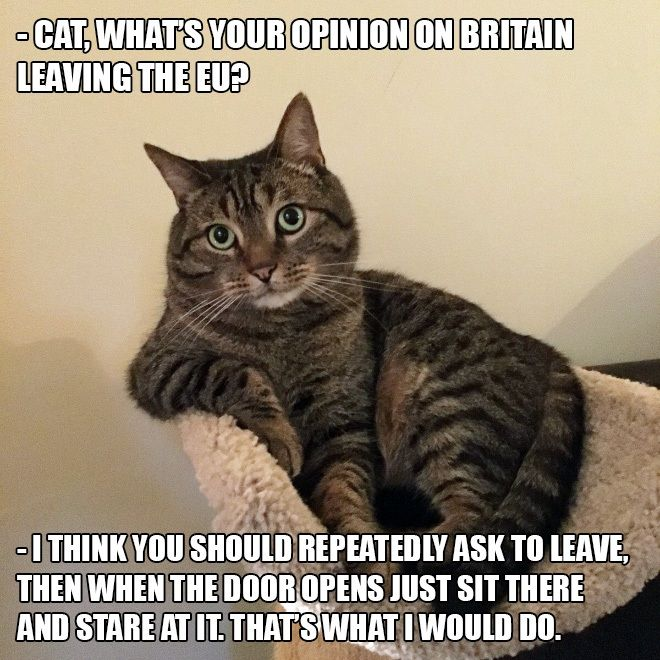 Cat S Opinion On Brexit Brexit Humour Cat Advice Funny Pictures