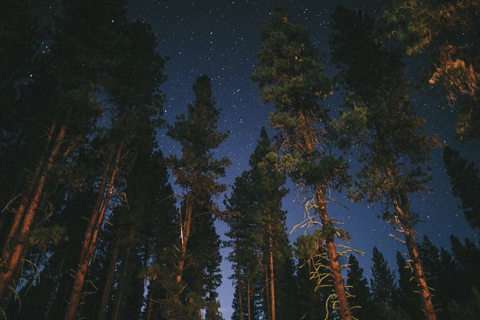 camping in the woods at night. Forest Campground Weddings Are Quickly Becoming Our Favorite. Not Only Because They Incredible Locations For Photography, But More Due To The People Camping In Woods At Night