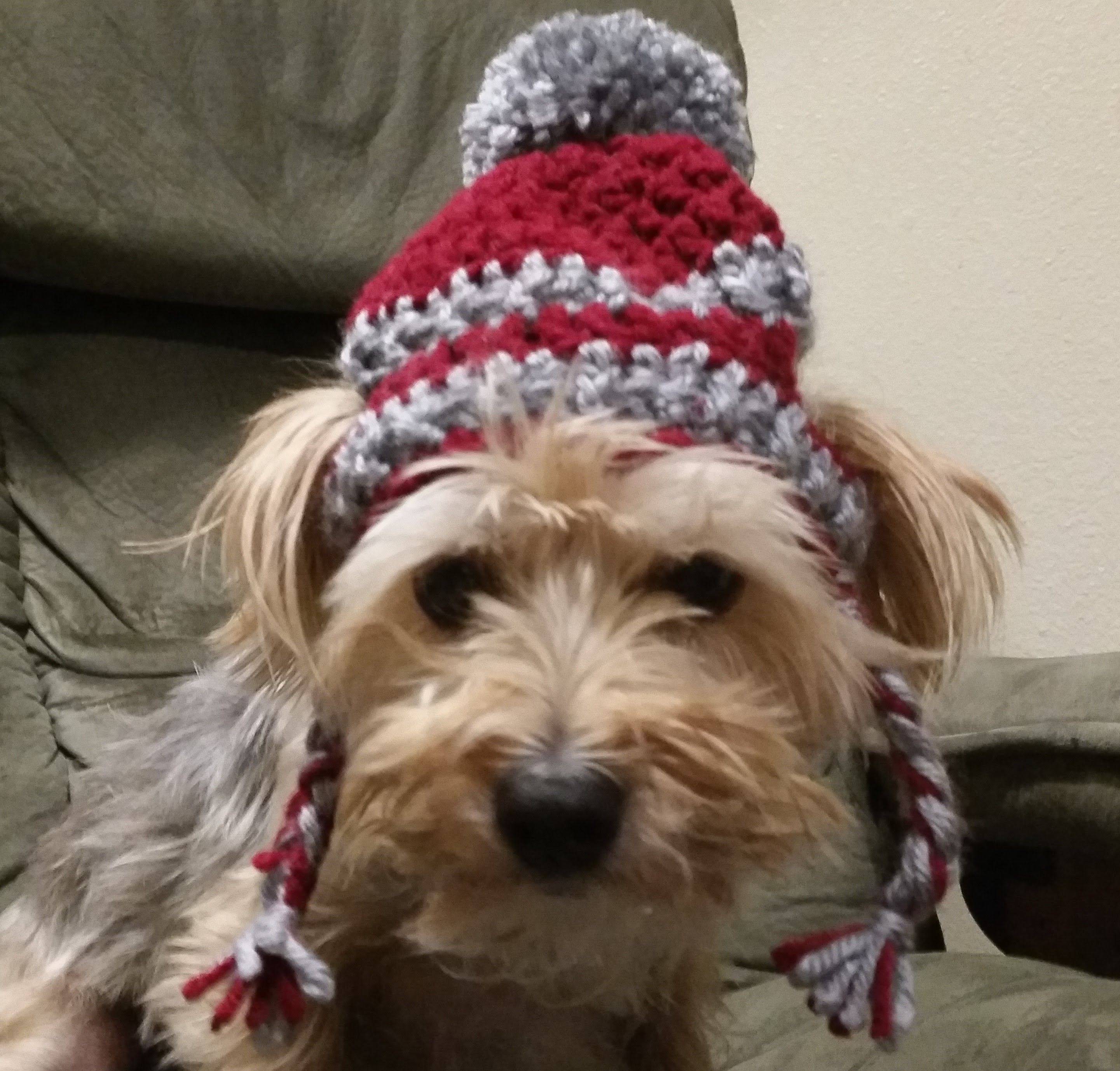 Crochet Hat for Dogs Tutorial | Crochet, Tutorials and Dog