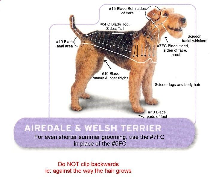 Airedale Terrier And Welsh Terrier Grooming Chart Dog Grooming Styles Dog Clippers Dog Grooming Salons
