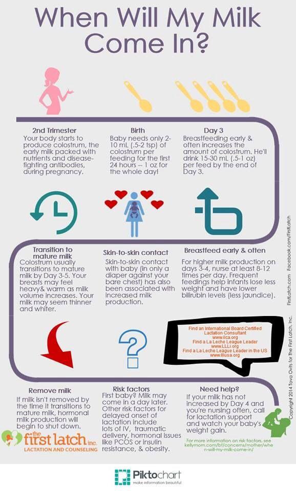 Breast Feeding Timeline  Pregnancy  Breastfeeding -7357