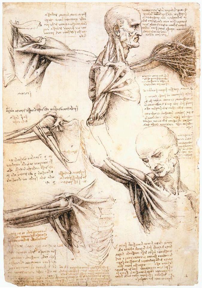 Berühmt Da Vincis Zeichnungen Anatomie Bilder - Menschliche Anatomie ...
