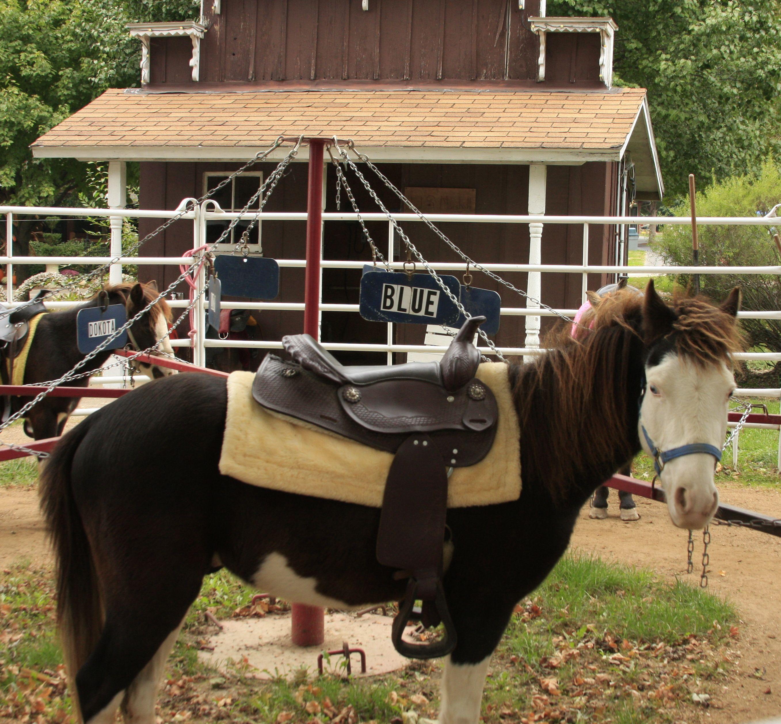Amish Life ~ Sarah's Country Kitchen ~