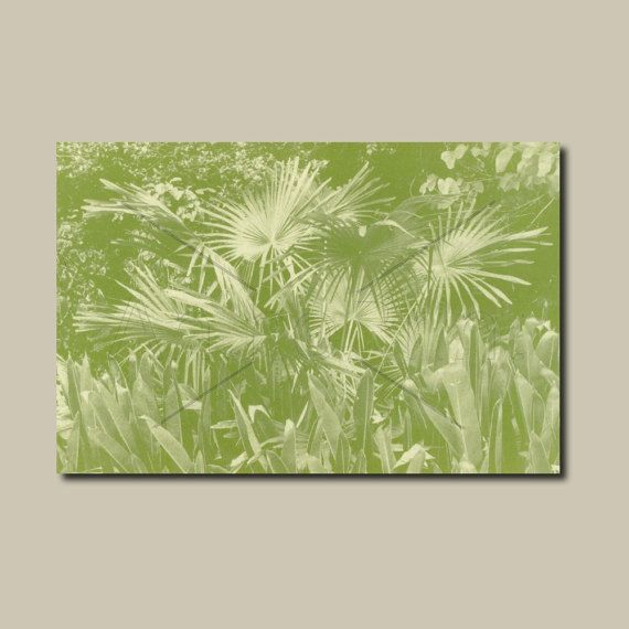 Anthotype Green Canvas Wall Art Print. Palm Grove Anthotype Wall ...