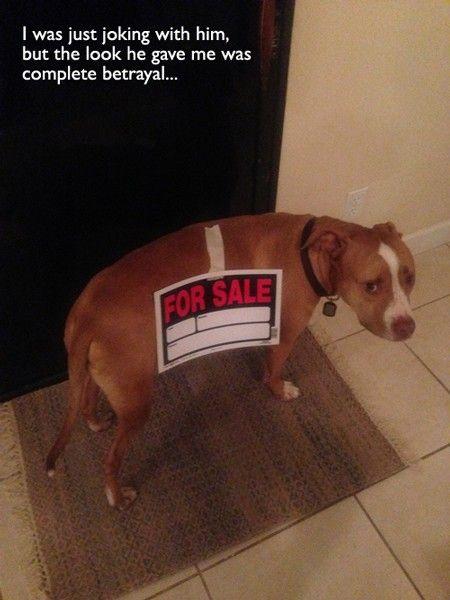 Funny sad puppy face